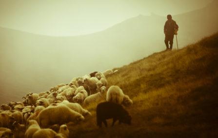 Երազահան Հովիվ