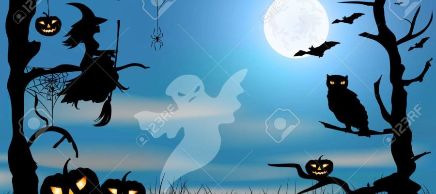 գիշերային թռչուններ