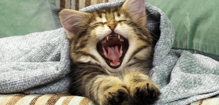 Երազահան Հորանջել: