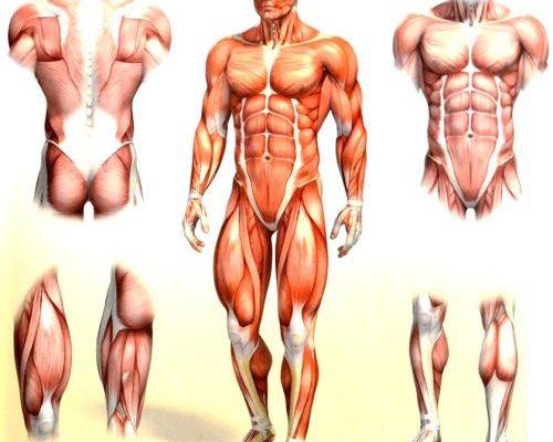 երազահան մկան