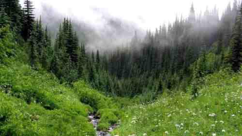 Երազահան Ընդարձակ Անտառներ