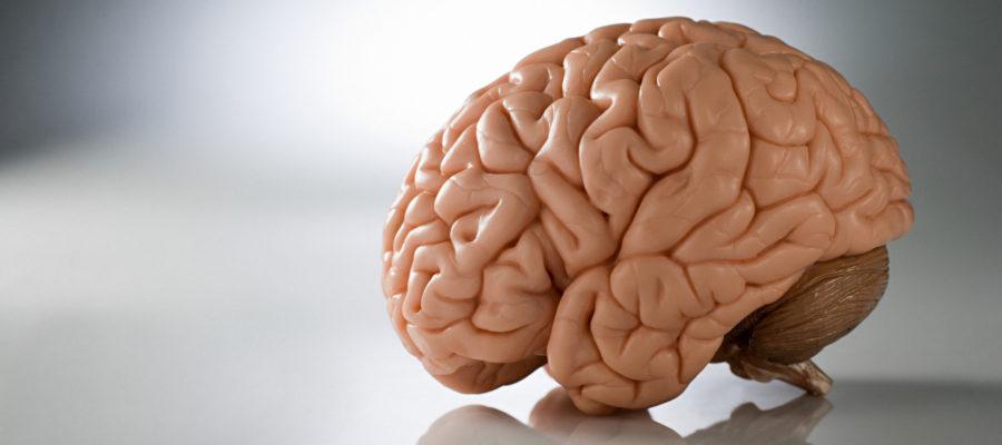 երազահան ուղեղ