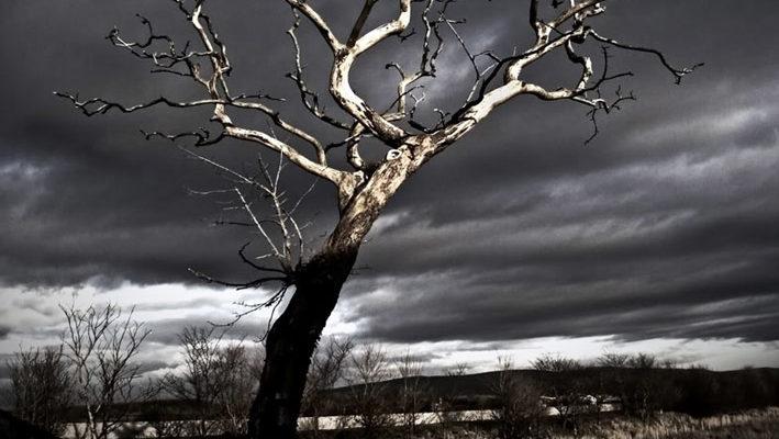 Երազահան Ծառ Առանց Տերեվների